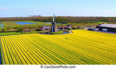 éolienne, pays-bas, aérien, champ, floraison, traditionnel, tulipe
