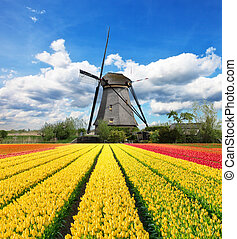 éolienne, tulipes, hollandais, champ, vibrant