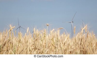 éoliennes, créé, champs, énergie, wheat., haut, électrique, fin, alternative