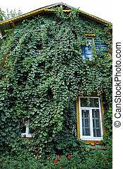 épület, zöld