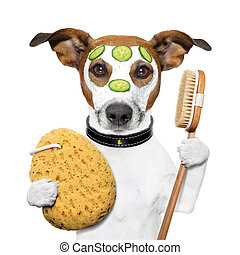 éponge, wellness, spa, chien, laver