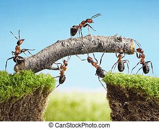 équipe, de, fourmis, construire, pont, collaboration