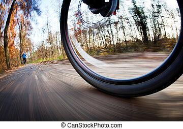 équitation bicyclette, dans, a, parc ville, sur, a, agréable, autumn/fall, jour