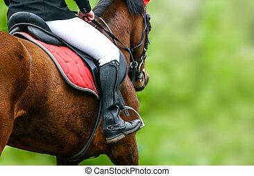 équitation, cheval, closeup