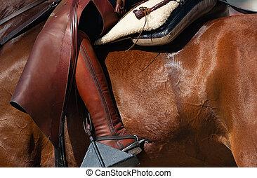 équitation, cheval, concept