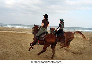 équitation, cheval, oman