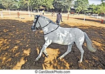 équitation, cours, cavalier, cheval, trains