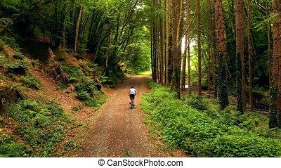 équitation cycle, forêt, homme, 4k