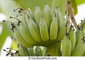 érés, banánok, csokor