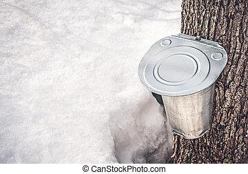 érable, attaché, sève, rassembler, seau, arbre, métal