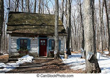 érable, maison, arbres, bûche, seaux