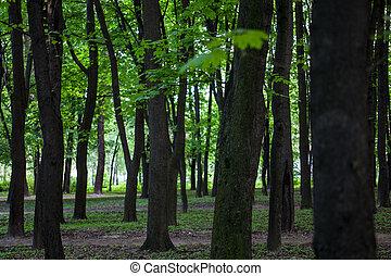 Érable, vert, forêt, Arbres