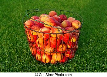 érett, piros alma, képben látható, a, zöld fű