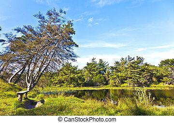 érintetlen, természet, képben látható, a, sziget, közül, fanoe, alatt, dánia