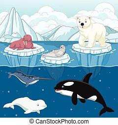 észak, északi-sark, lengyel, állat, vad, karikatúra