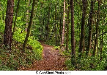 été, à feuilles caduques, forêt, jour, sentier