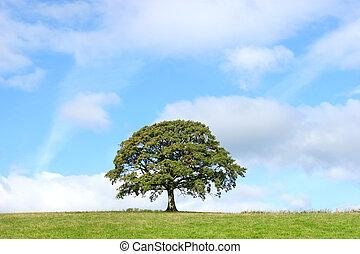 été, arbre chêne