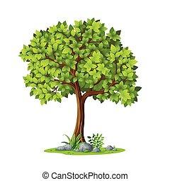été, arbre, contre, illustration, fond, blanc