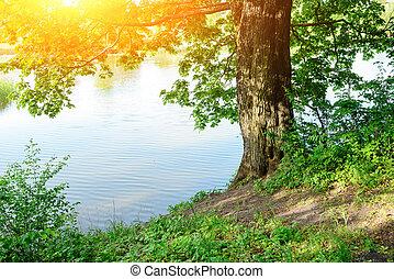 été, arbre, une, merveilleux, rivière, jour, banque