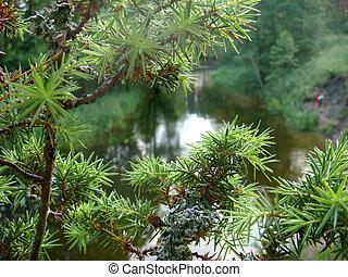été, arbres, day., merveilleux, rive