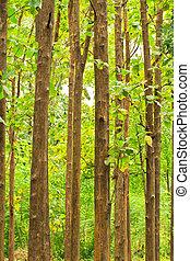 été, arbres