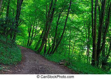été, arbres, parc, vert, sentier, jour