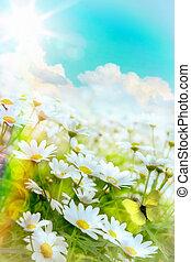 été, art, élevé, clair, fond, light;, naturel, fleurs