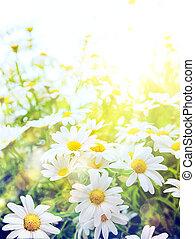 été, art, clair, fond, naturel, fleurs