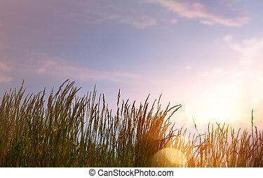 été, art, coucher soleil, fond, contre, ciel, résumé, frais, herbe