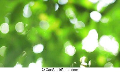été, barbouillage, arrière-plan vert, bokeh, naturel