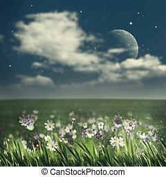 été, beauté naturelle, résumé, arrière-plans, fleurs, night.