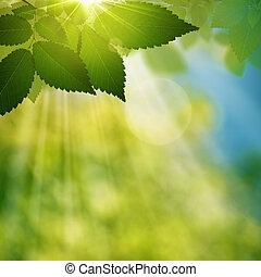 été, beauté naturelle, résumé, arrière-plans, forêt, jour