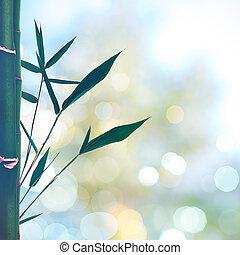 été, beauté, résumé, arrière-plans, bokeh, oriental, bambou, herbe