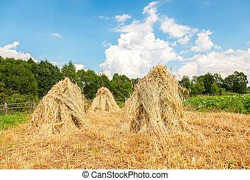été, blé, entassé, ensoleillé, day., champ, rural, sheaves, piles, paysage