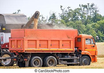 été, blé, moissonneuse, agricole, combiner, unloads, camion, field.