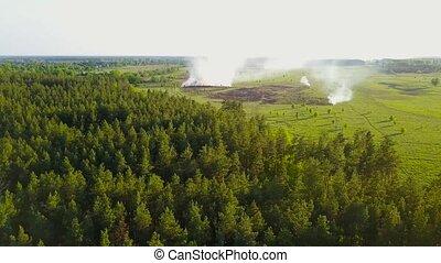 été, brûlures, aérien, pré, ensoleillé, day., forêt, herbe, ...