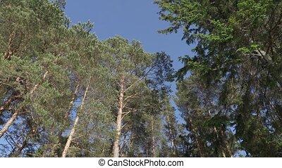 été, branches, feuilles, arbres, vert, après-midi