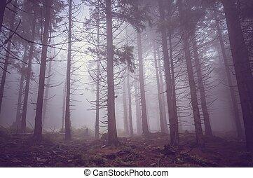 été, brouillard, hanté, forêt