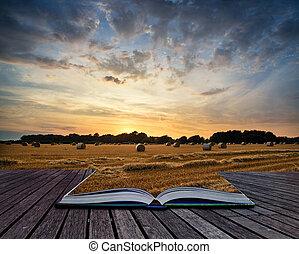 été, c, foin, image, champ, coucher soleil, rural, balles, sur, paysage
