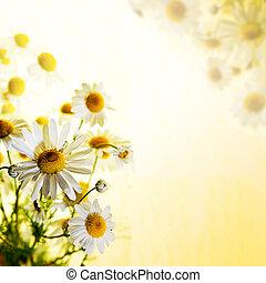 été, camomille, wildflowers: