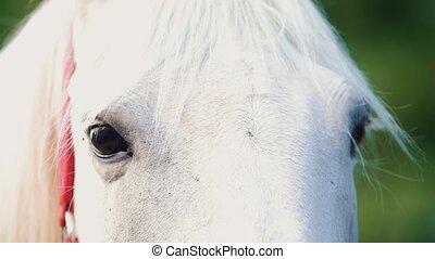 été, cheval, autour de, regarder, blanc, jour
