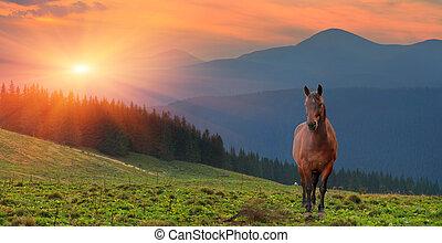 été, cheval, montagnes., coucher soleil, paysage