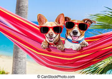 été, chiens, hamac