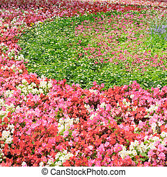 été, clair, fleur, fleurs, lit