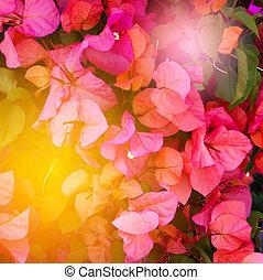 été, clair, fleurs, fond