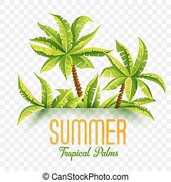 été, cocotiers, illustration, exotique, vecteur, jungle, forêt