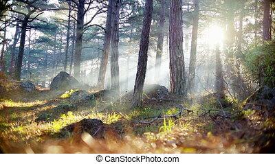 été, conte fées, coucher soleil, forêt