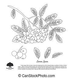 été, contour, montagne, automne, arrière-plan., rowan, branche, cendre blanche, dessin