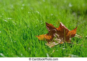 été, coolness., feuilles, automne, grass., indien