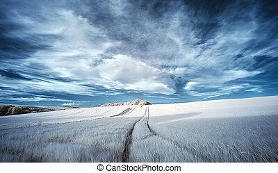été, couleur fausse, champs, sur, infrarouge, surréaliste, abrutissant, agricole, paysage
